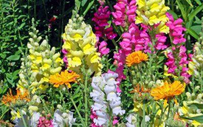Conociendo flores: antirrino
