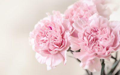 Conociendo flores: clavel