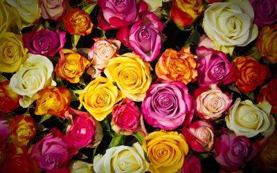 Ramos de rosas: ¿qué significa cada color?