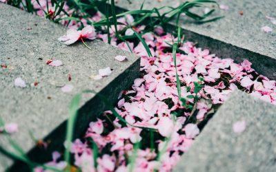 Velatorio, qué es y cómo comportarse
